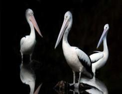 العرب اليوم - سوريا تزود حديقة الحيوانات في قازان بطيور الفلامنغو