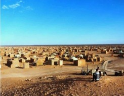 العرب اليوم - سيدات يرعين قطيع أبقار على الطريق الصحراوي يتسببن بإثارة الرأي العام في مصر