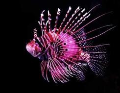 العرب اليوم - العثور على سمكة حية يعود تاريخها لـ420 مليون عام