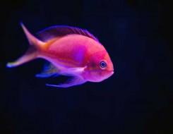 العرب اليوم - اصطياد سمكة يزيد عمرها على 100 عام في الولايات المتحدة