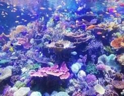 العرب اليوم - أبوظبي تدشن أكبر مشروع في المنطقة لإعادة تأهيل الشعاب المرجانية