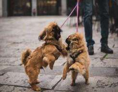 العرب اليوم - دراسة تكشف أسرار تواصل الكلاب مع البشر