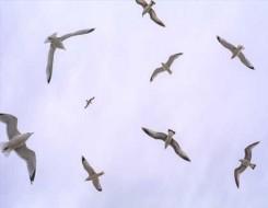 العرب اليوم - الضجيج يمنع صغار الطيور من تعلم الغناء