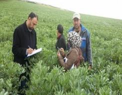 العرب اليوم - مصر تأمل في زراعة 3.5 مليون فدان قمح في 2021 - 2022