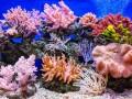 العرب اليوم - حقائق عن الحاجز المرجاني العظيم في رحلة سياحية استثنائية