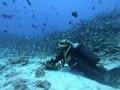 """العرب اليوم - أميركي يصطاد حيوان مائي نادر يُسمى بـ""""سمكة التمساح"""" تعود إلى 100 مليون سنة"""
