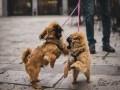 العرب اليوم - دراسة جديدة لجامعة فيينا تكشف أن الكلاب تستطيع تمييز أكاذيب البشر