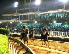 """العرب اليوم - خيول مهددة بالانقراض تبدأ """"حياة جديدة"""" في تشيرنوبيل"""