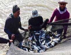 العرب اليوم - مسؤول لبناني يعلن أن 7 أطنان من الأسماك النافقة تم بيعها للمواطنين