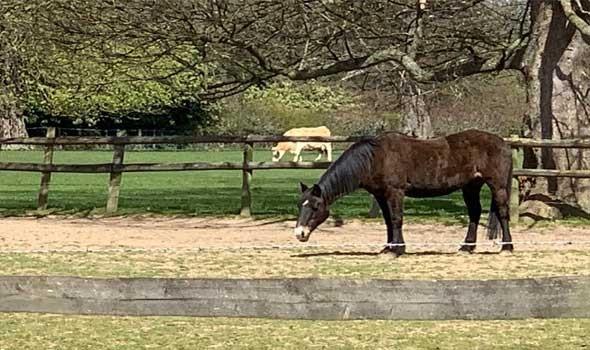 العرب اليوم - إنتاج مربط دبي للخيول العربية ينتزع الذهب في بطولة بيرغامو الدولية