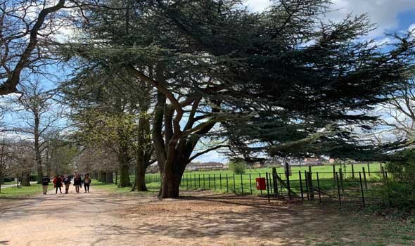 العرب اليوم - دراسة تكشف جريمة بشرية بحق الأشجار