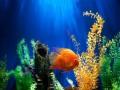 العرب اليوم - اختتام أكبر رحلة استكشافية لمسح الشعاب المرجانية في العالم