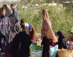 """العرب اليوم - مشروع محو الأمية عبر الإنترنت للمناطق الريفية في مصر يفوز بجائزة """"اليونسكو"""""""