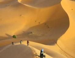 العرب اليوم - ليبي يعثر على بقايا هيكل عظمي شبه متكامل يشير إلى ديناصور صغير