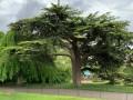 العرب اليوم - محاولات لإنقاذ أكبر شجرة في العالم مع اقتراب حريق كاليفورنيا