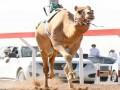 العرب اليوم - الإتحاد السعودي للهجن  يعلن عن تفاصيل «مهرجان ولي العهد للهجن» في الدورة الثالثة