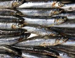 العرب اليوم - فوائد زيت السمك بالنسبة للرجال