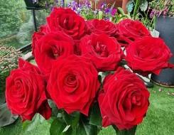 العرب اليوم - استغلّي زهور الربيع لديكور حفل زفاف ملكي
