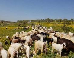 """العرب اليوم - """"جنون البقر"""" يدفع الصين لحظر إستيراد لحوم الابقار البريطانية"""