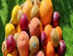 العرب اليوم - وزارة البيئة الفرنسية تعلن عن حظر التغليف البلاستيكي لكل أنواع الفاكهة والخضر