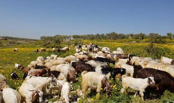 جنون البقر يدفع الصين لحظر إستيراد لحوم الابقار البريطانية
