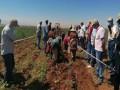 العرب اليوم - «نفابة الفلاحين المصرية» تناشد الحكومة عدم التخلي عن دعم المستلزمات الزراعية