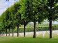 العرب اليوم - إفتتاح أول مقبرة بيئية  في مدينة فلاندرز في بلجيكا